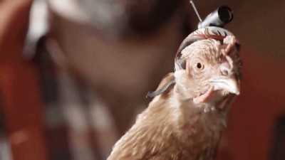 Chicken inspired Engineers to invent Optical Image Stabilization