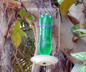 Homemade water Feeder for wild bird from pet bottle