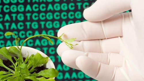 Biotechnology in Pakistan