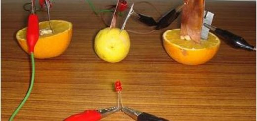 How to make Fruit Cell